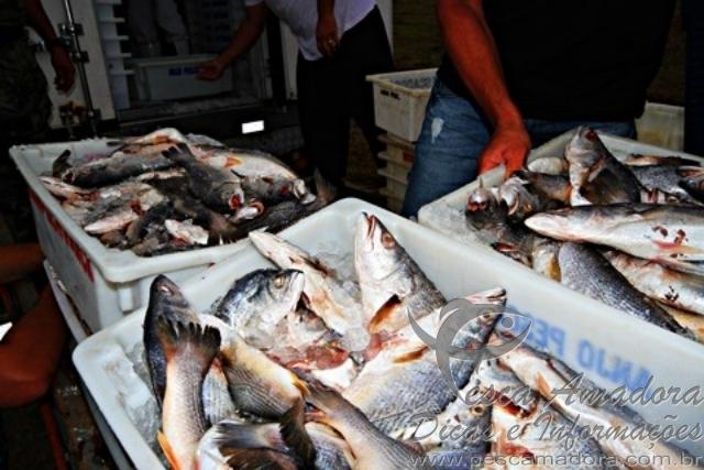 onze toneladas de pescado apreendido em Laguna-SC