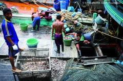 Pescado irregular sem cuidados de higiene (Foto: Arquivo Pesca Amadora)