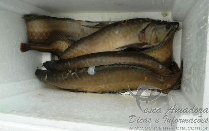 pescado apreendido em Manaus