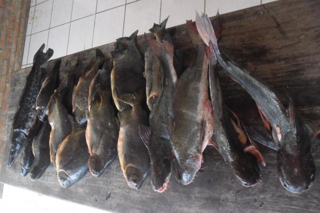 pescado apreendido em Miranda-MS