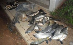 pescado apreendido no Parana