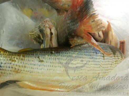 pescado apreendido no rio Ivai-PR 2