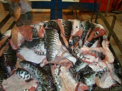 pescado apreendido pela pma no Pantanal