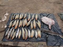 pescado apreendido pela polici militar em Lins-SP