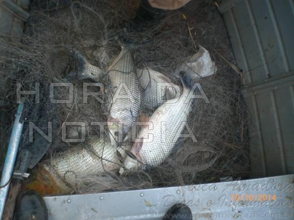 pescado apreendido