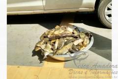 pescado apreendino no Rio Tiete em Barbosa-SP