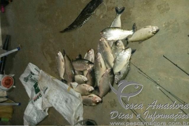 pescado e material de pesca apreendidos no interior do MT