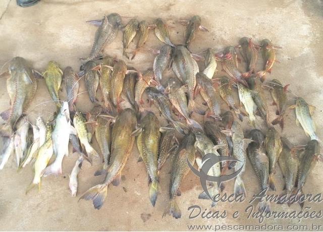 pescado fora da medida apreendido no rio Parana em Icaraima-PR