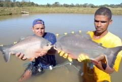 pescado produzido em tocantins
