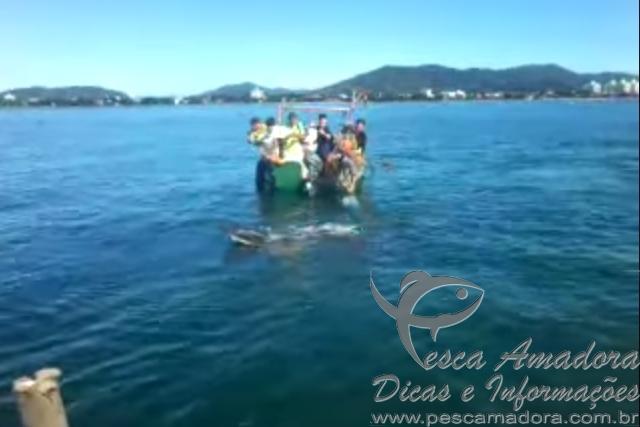 pescadores resgatam baleia presa em rede de pesca ilegal em Santa Catarina