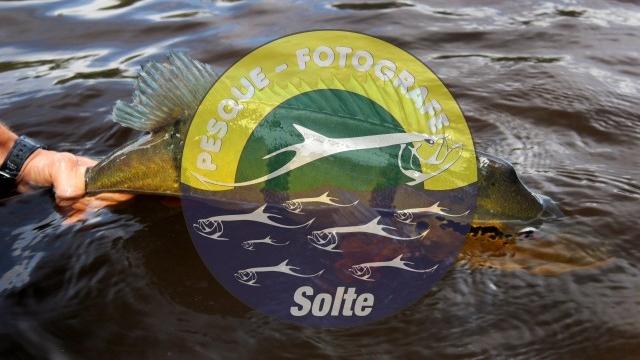 Pesque e Solte – Dicas e Procedimentos