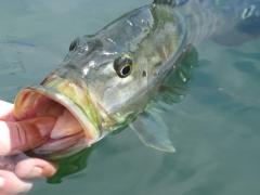 pesque-solte-delicadeza