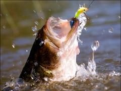 pesque-solte-fisgada