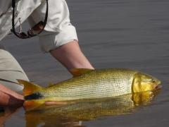 pesque-solte-tempo-reavivando