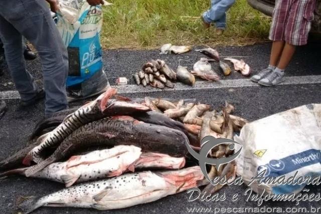 pma apreende 702 kg de pescado ilegal no Mato Grosso