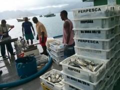pma apreende quase 2t de peixe em Ubatuba-SP