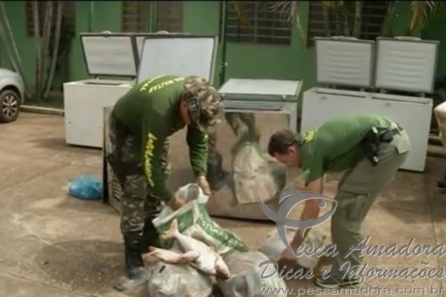 policia civil apreende 652 kg de pescado ilegal em Goias 3
