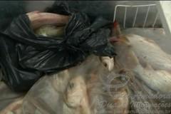 policia civil apreende 652 kg de pescado ilegal em Goias 4