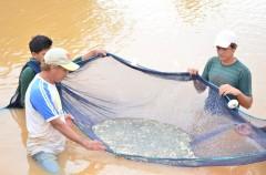 Produtores Aquicolas em manejo de pescado