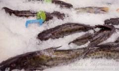 producao de pescado no Tocantins 01