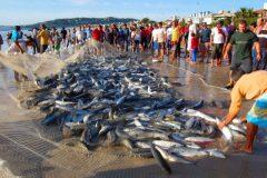 sebrepesca da tainha na costa brasileira