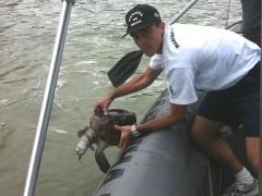 tartarugas encontradas presa em rede de pesca em Vitoria-ES 2