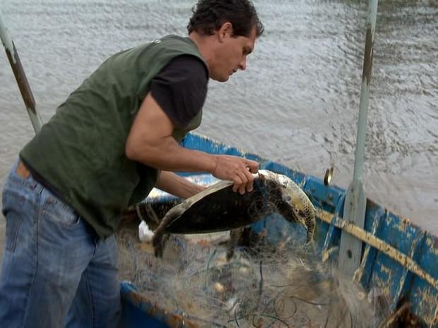 tartarugas encontradas presa em rede de pesca em Vitoria-ES 3