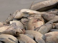 Peixes foram recolhidos da lagoa Juara, na Serra. (Foto: Reprodução/TV Gazeta)